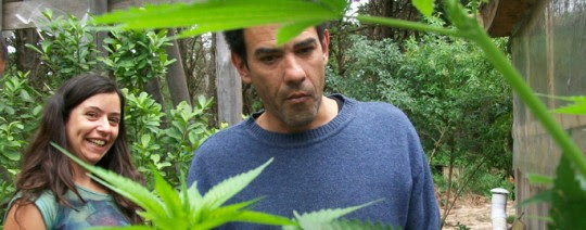 Juan Andrés Vaz, Marihuana, Kienyke