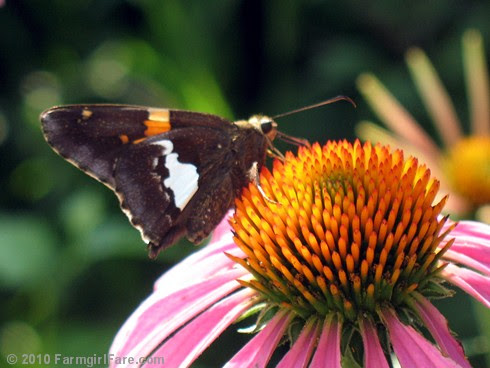 Attracting Pollinators 7