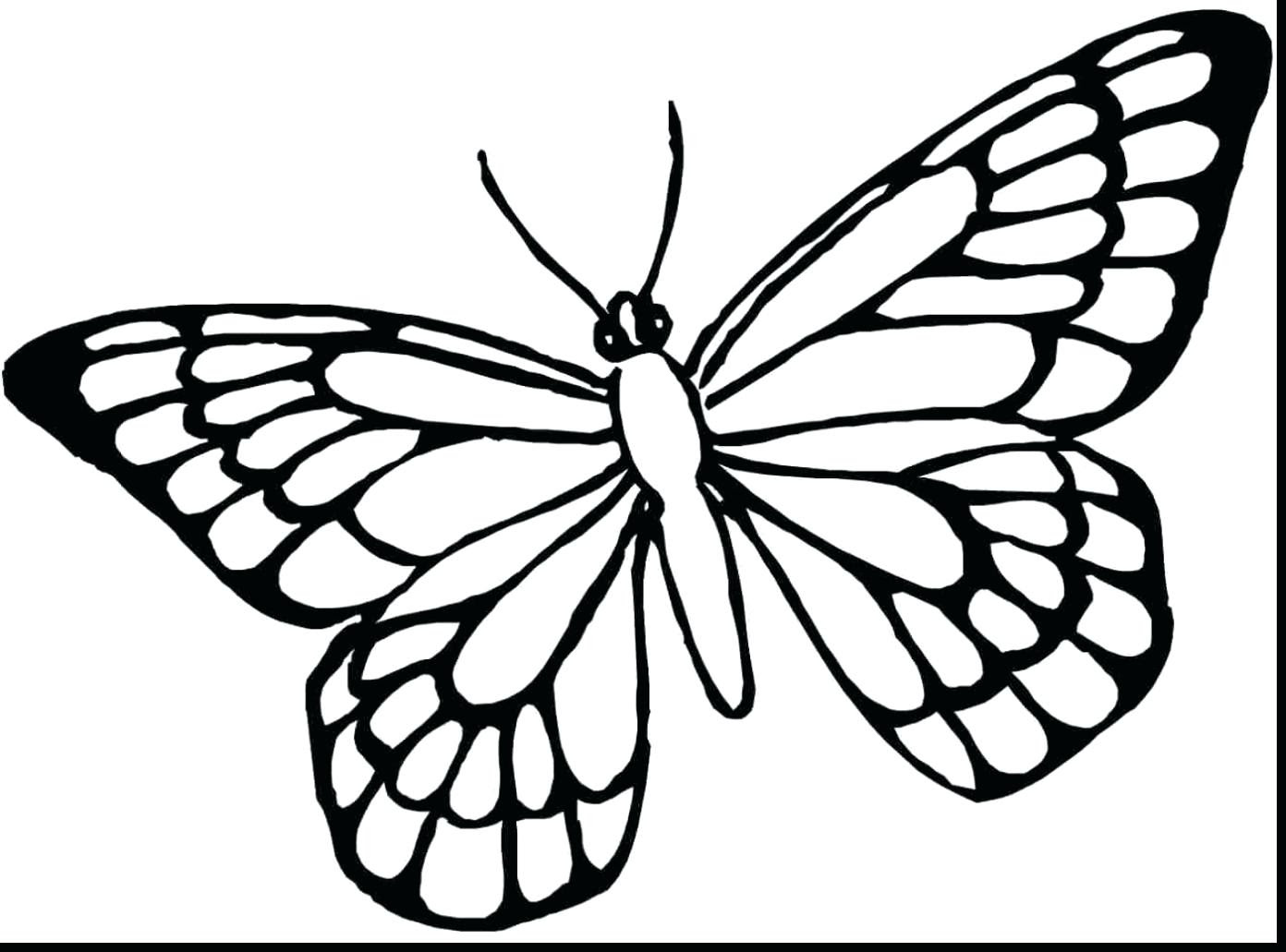 Butterfly Wing Outline | Free download on ClipArtMag
