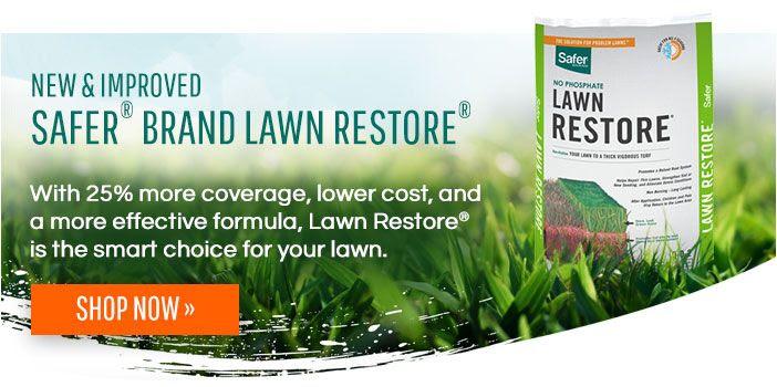 When To Fertilize Your Lawn