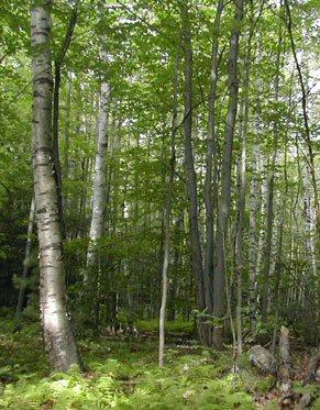 forestlanddd