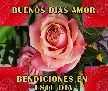 Imagenes De Rosas Para Desear Buenos Dias Rosas De Amor