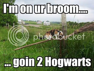 Harry Potter Broom Cat Funny Hogwarts