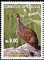 Puna Tinamou Tinamotis pentlandii