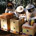 Apimaye Hive
