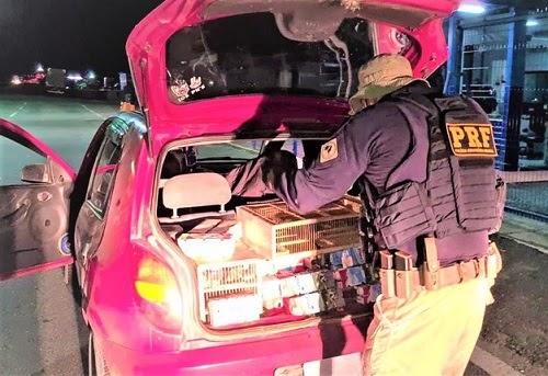 Jequié: Mais de mil pássaros silvestres são resgatados em carro na BR-116