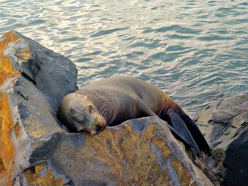 Sleeping comfortably by CameliaTWU