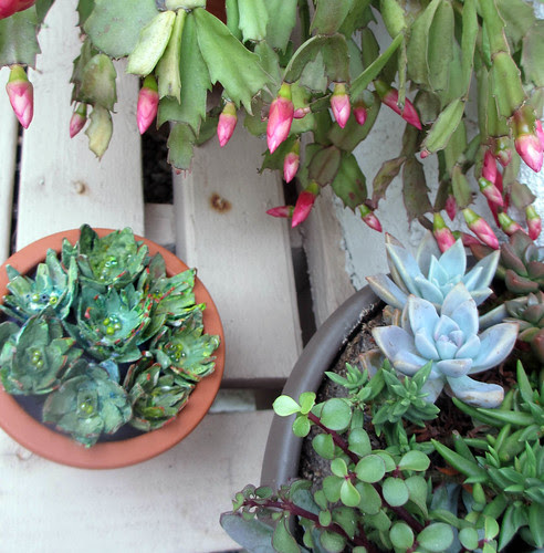 egg carton succulents