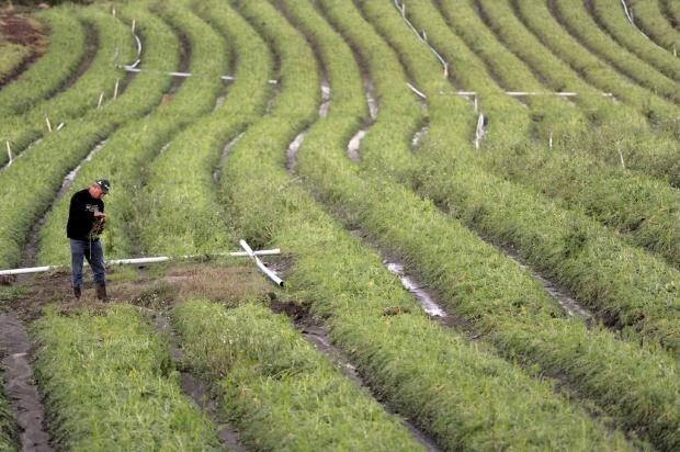 Secretário da Agricultura deve verificar prejuízos causados pelo granizo no interior de Caxias do Sul neste domingo Juan Barbosa/Agência RBS