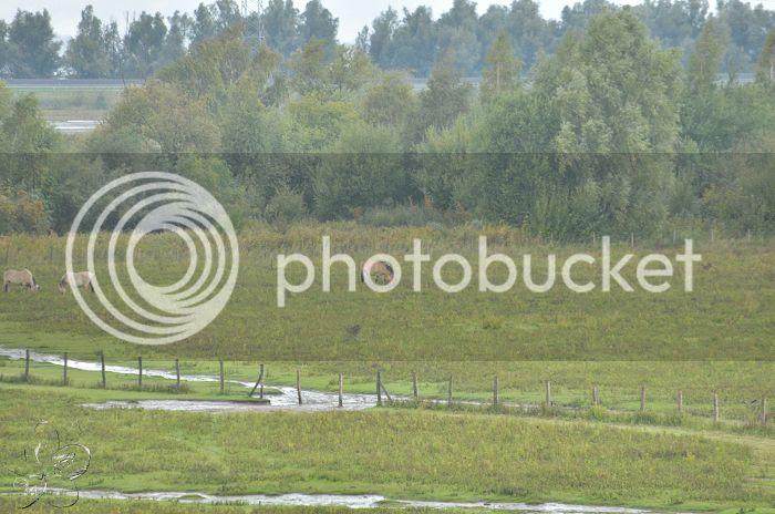 photo 15-10-2013StaatsbosbeheerZuid-Holland055-border.jpg