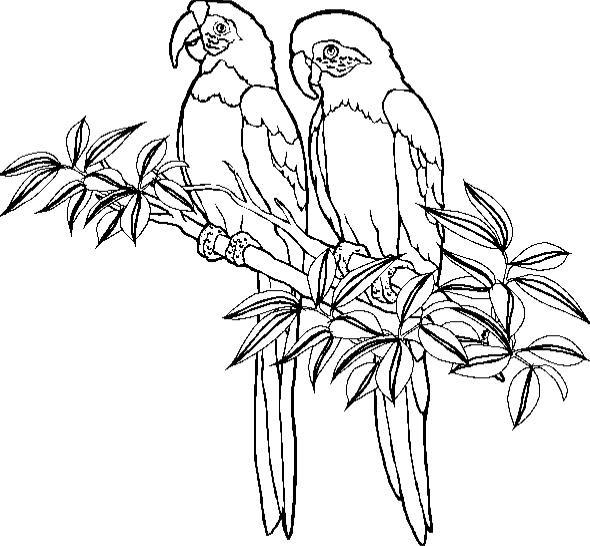 Dibujos Para Colorear Loros Y Papagayos Imágenes Animadas Gifs