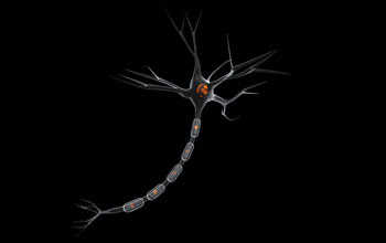A nerve cell in the human brain (a neuron)
