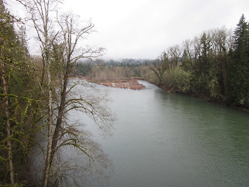 Clackamas River, early spring leafing-out