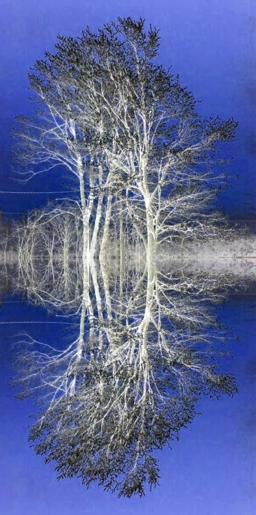 White winter trees reflected. [Photo by Marianne Dow]