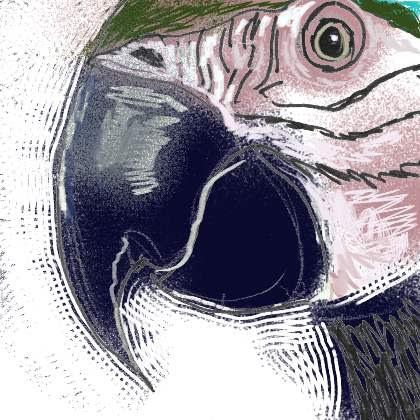 Parrot Tom Williams