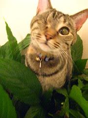 Maggie, jungle cat