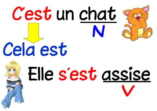 Affichage étude de la langue