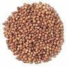Cilantro - coriander
