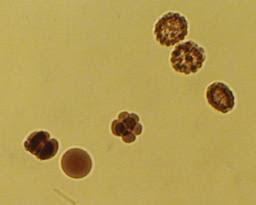 embryos.jpg
