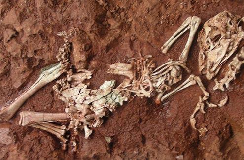 Dinosaur Yulong μίνι Δεινοσαυράκια