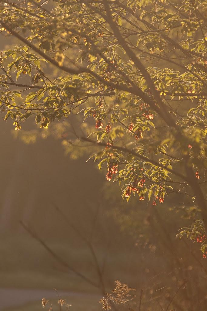 morning sun tree