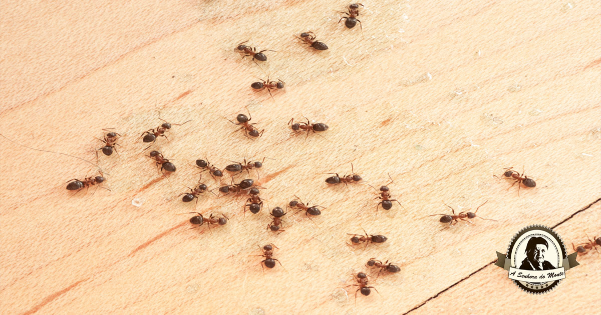 Resultado de imagem para formigas menta fotos