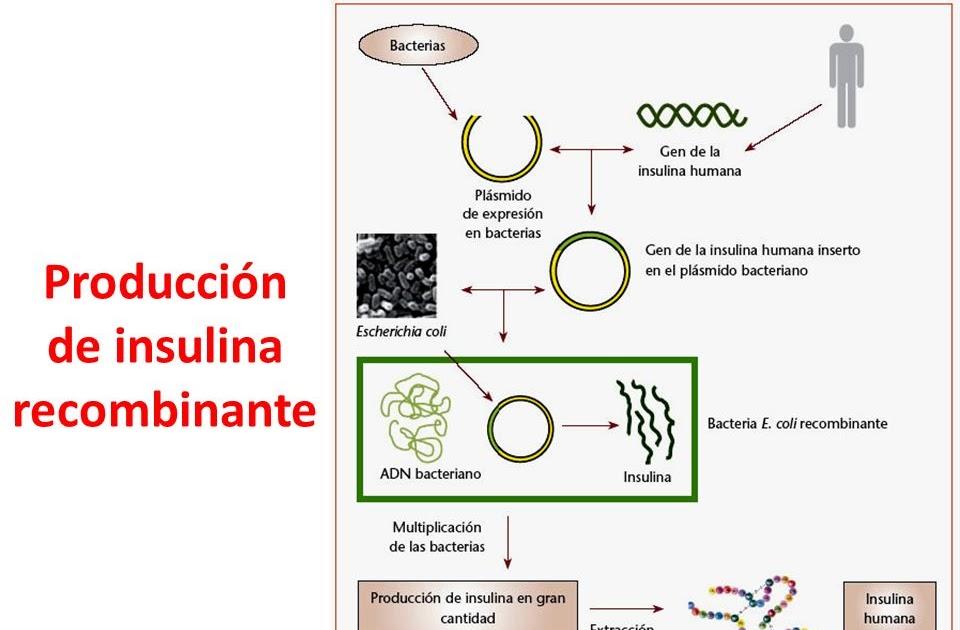 Armario Limpieza ~ Biología Molecular Diabetes Mellitus