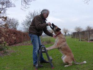 equilíbrio para cães
