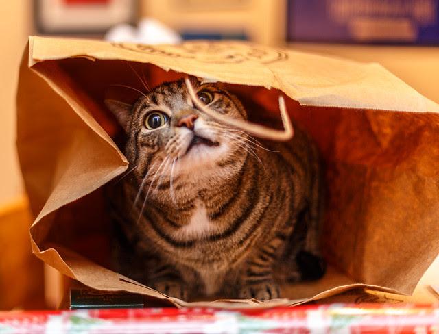 Casey in the Bag (2)