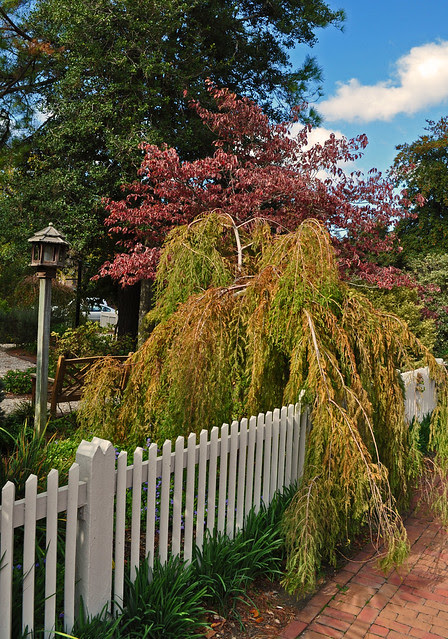 Adams Garden (4)