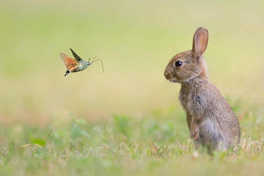 animals-with-butterflies-11__880