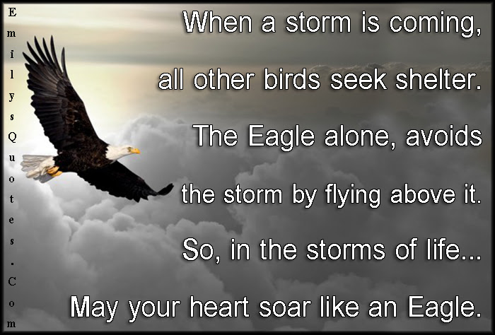 When A Storm Is Coming All Other Birds Seek Shelter The Eagle