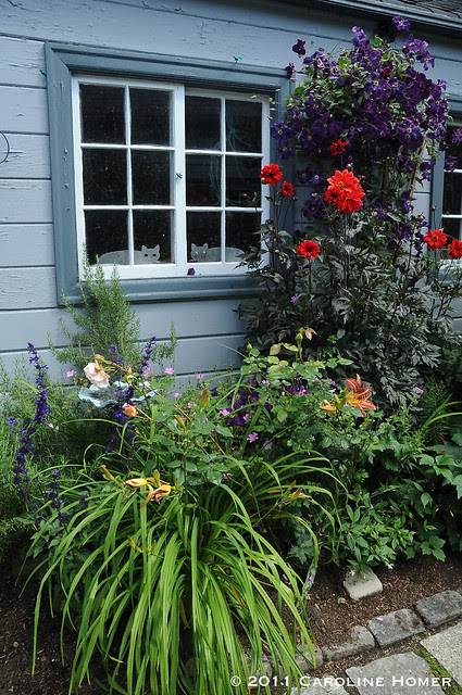 Plantings along the blue shed
