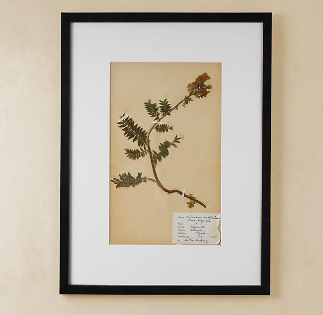 Botanical Pressing