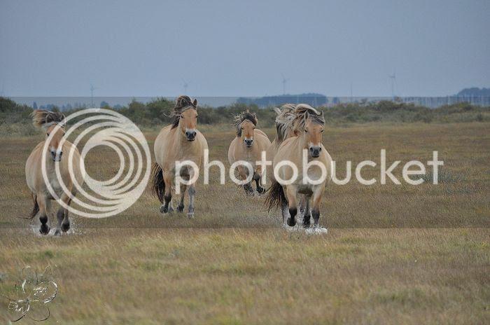 photo 15-10-2013StaatsbosbeheerZuid-Holland321-border.jpg