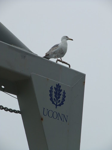 gull on A-frame