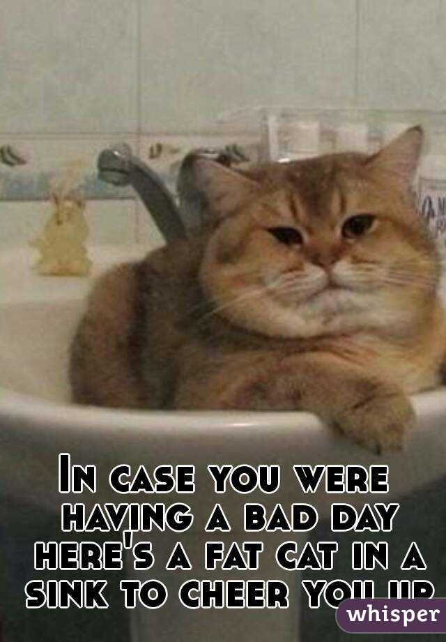 In Case You Were Having A Bad Day Heres A Fat Cat In A Sink To