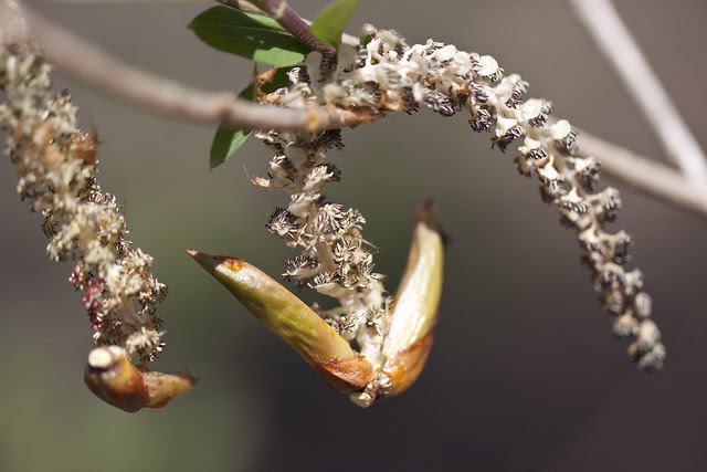 catkin old-new