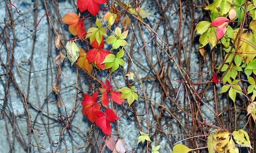 un poco más de otoño 25-11-2010 18-49-57