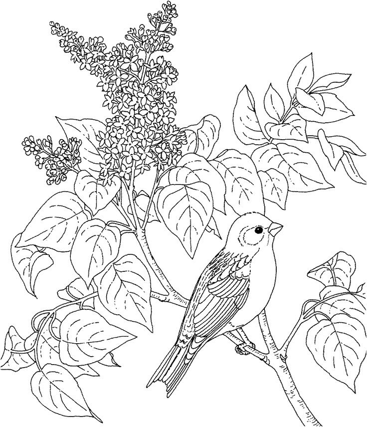 - Birds And Flowers Coloring Pages