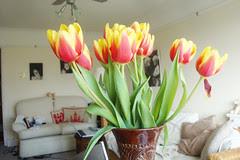 Tulipes Mars010v