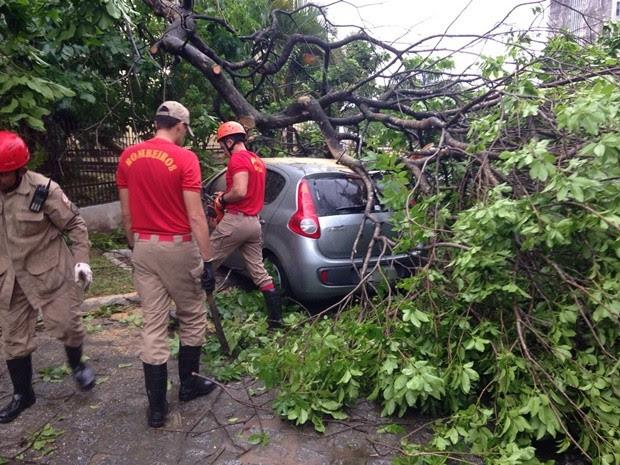 Árvore caiu sobre dois carros no bairro de Jaguaribe (Foto: Walter Paparazzo/G1)