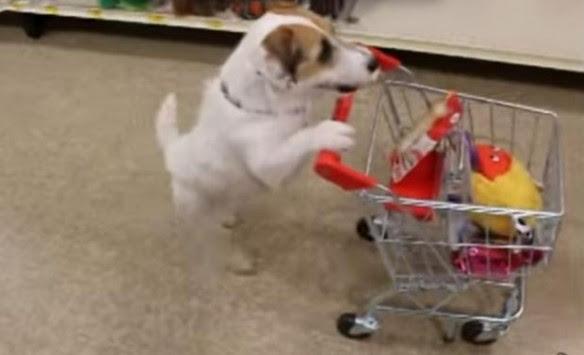 Απίστευτο βίντεο: Δεν φαντάζεσαι τι μπορεί να κάνει αυτός ο σκύλος!