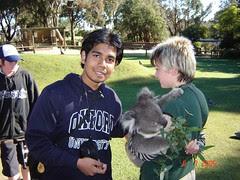 Bersama koala bear di Ballarat Wildlife Park, Australia