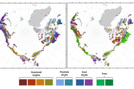 A la derecha, predicción de la distribución de la vegetación en 2050.| R. Pearson
