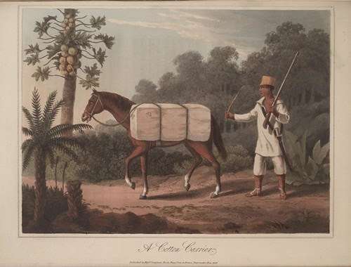 A Cotton Carrier - Travels in Brazil  -  Henry Koster, 1816