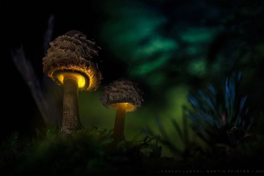mushrooms-martin-pfister-14