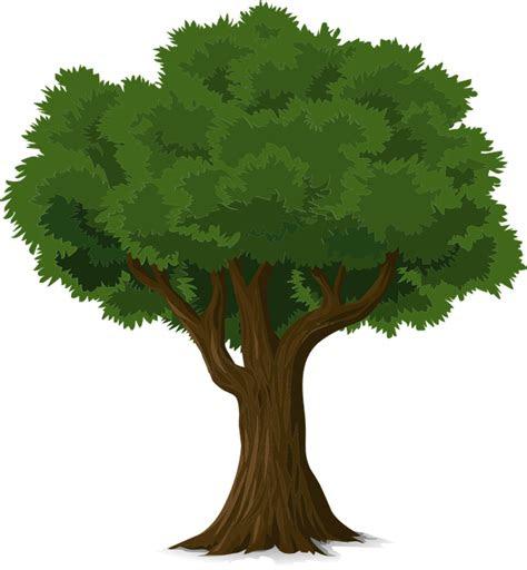 pohon hutan batang gambar vektor gratis  pixabay