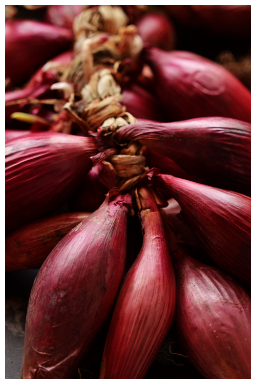 tropea onions© by Haalo
