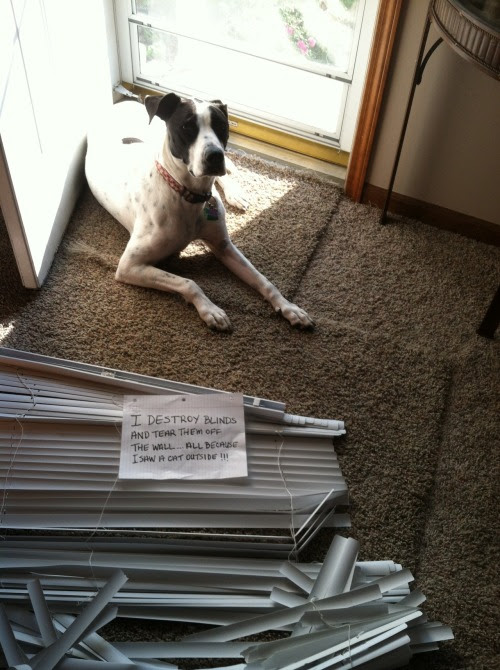 I destroy blinds and tear them off the wall…all because I saw a cat outside!!!